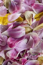 Preview iPhone wallpaper Many pink flower petals, water droplets