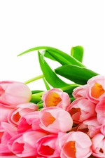 Preview iPhone wallpaper Many pink tulip flowers, white background
