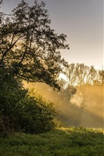 Preview iPhone wallpaper Morning, trees, sun rays, grass, green, nature