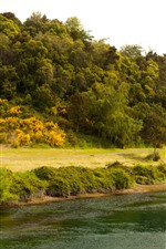 Nova Zelândia, Rio Waikato, Inclinação, Árvores, Verde