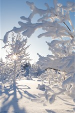 Preview iPhone wallpaper Northwest Territories, Canada, thick snow, trees, sun rays, winter