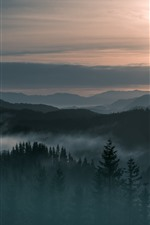 Preview iPhone wallpaper Norway, mountains, fog, forest, sunrise, morning