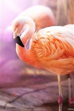 Um pássaro, flamingo, penas cor-de-rosa, nebuloso