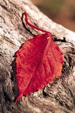 Preview iPhone wallpaper One red leaf, wood