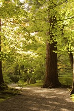 Preview iPhone wallpaper Park, trees, green leaves, shadow, sunshine
