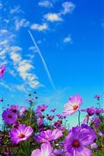 Aperçu iPhone fond d'écranFleurs roses, ciel bleu, nuages