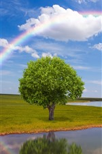 Preview iPhone wallpaper River, tree, rainbow, sky, clouds