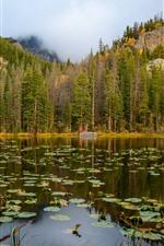 iPhone обои Скалистые горы национальный парк, деревья, озеро, туман