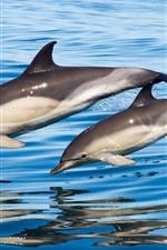 Aperçu iPhone fond d'écranAnimal de mer, deux dauphins, sauter