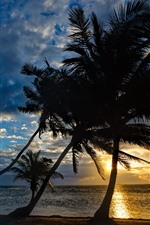 Preview iPhone wallpaper Sea, palm trees, silhouette, sunset, sky, clouds