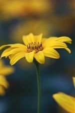 iPhone обои Желтые цветы, лепестки, макросъемка, туманные