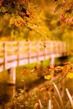 Preview iPhone wallpaper Autumn, maple leaves, bridge, river, hazy