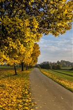 Preview iPhone wallpaper Autumn, trees, yellow maple leaves, road, fields