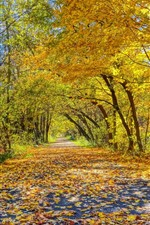 Preview iPhone wallpaper Beautiful autumn, road, trees, yellow leaves