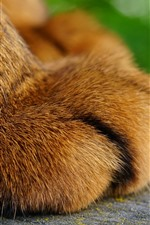 Preview iPhone wallpaper Cat paw macro photography, foot