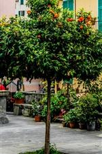 Чинкве-Терре, Италия, Дерево, Дома, Цветы