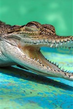 Preview iPhone wallpaper Crocodile, open mouth, teeth