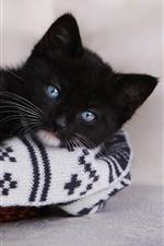 Gatinho preto fofo, olhos azuis, olhe, descanse