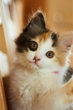 Preview iPhone wallpaper Cute kitten, look, eyes, paw, stairs
