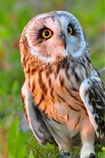 Preview iPhone wallpaper Cute owl, bird, grass