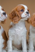 Preview iPhone wallpaper Cute three dogs, puppy