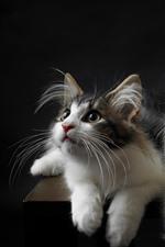 Nette zwei Katzen, Gesicht, Blick, schwarzer Hintergrund