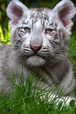 Preview iPhone wallpaper Cute white tiger cub, face, grass, rest