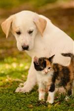 Preview iPhone wallpaper Dog and kitten, friends, grass