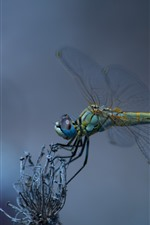 Preview iPhone wallpaper Dragonfly, wings, insect macro photography