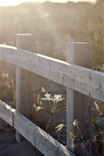 Preview iPhone wallpaper Fence, flowers, sun rays, hazy