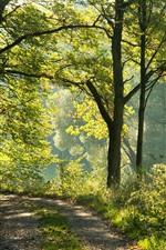 Alemanha, Bayern, árvores, sol, natureza cenário
