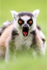 Preview iPhone wallpaper Lemur, front view, eyes, green grass, hazy