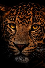 Preview iPhone wallpaper Leopard, face, eyes, look, black background