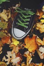 Folhas de plátano, sapatos, outono