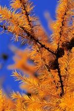 Preview iPhone wallpaper Plants, needles, autumn, twigs