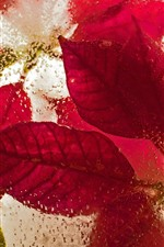 Preview iPhone wallpaper Red leaves, ice, frozen