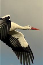 Preview iPhone wallpaper Stork flight in sky