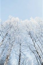 Preview iPhone wallpaper Trees, birch, snow, winter, sky