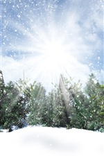 Preview iPhone wallpaper Trees, snow, sun rays, snowflakes, winter
