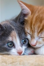 Preview iPhone wallpaper Two kittens sleeping, cat