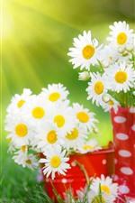 iPhone обои Белые цветы ромашки, красная чашка, солнечный свет