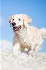 Preview iPhone wallpaper White dog running, flowers, hazy, blue sky