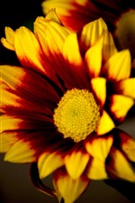 Preview iPhone wallpaper Yellow or orange flowers, petals, black background