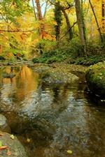 预览iPhone壁纸 秋天,森林,树木,石头,苔藓,小溪,水