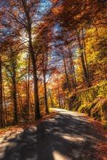 Outono, árvores, estrada, sol, folhas amarelas