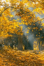 Preview iPhone wallpaper Autumn, trees, yellow leaves, sun rays