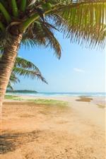 iPhone壁紙のプレビュー ビーチ、ヤシの木、海、熱帯のように