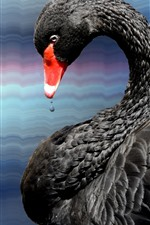Preview iPhone wallpaper Bird, black swan, feathers, neck, water