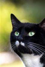 Gato preto, rosto, olhos verdes, olhar, fundo obscuro