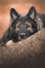 Черная собака отдыхает на склоне, смотреть, лицо
